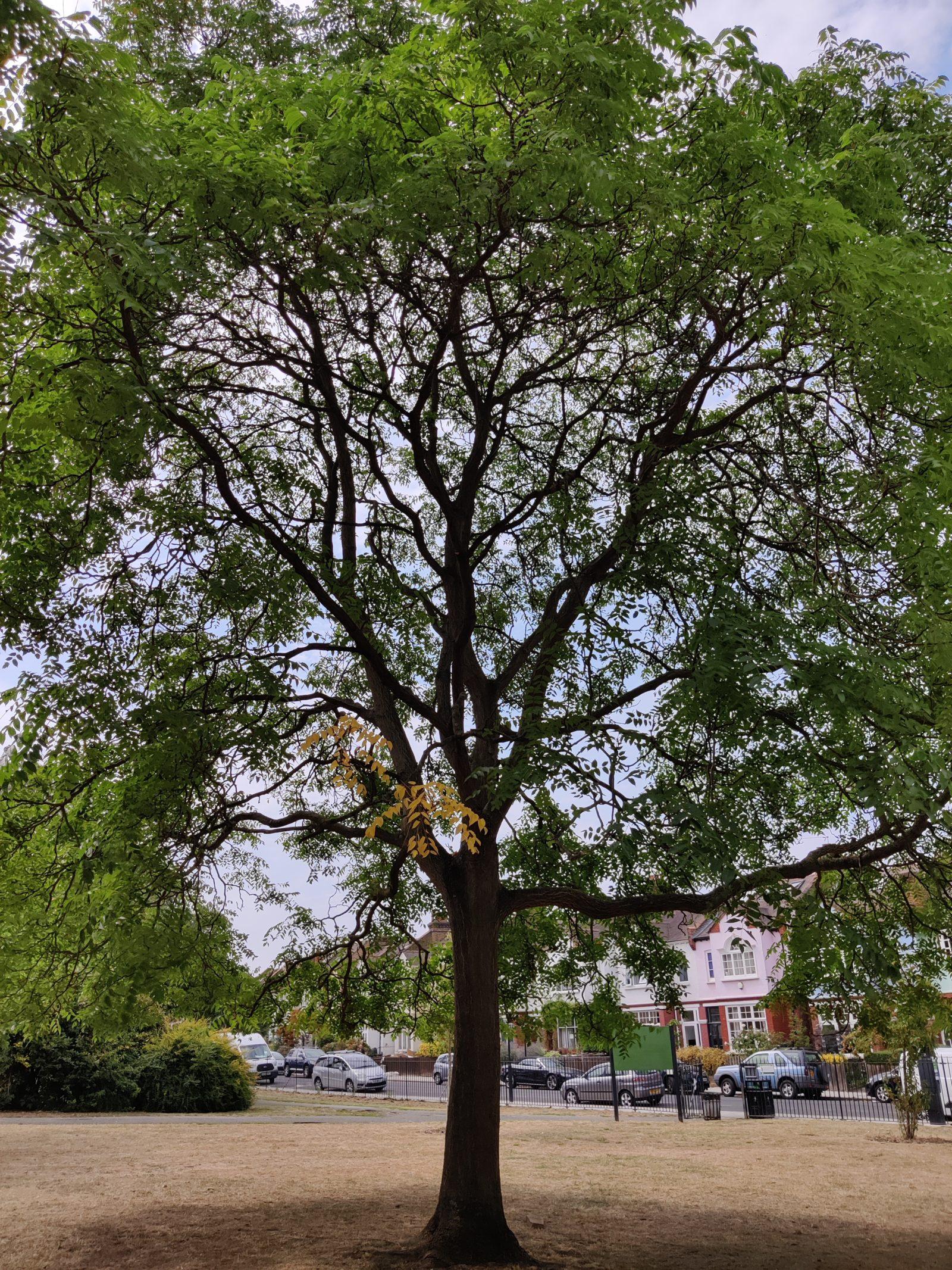 Tree 1 Stock