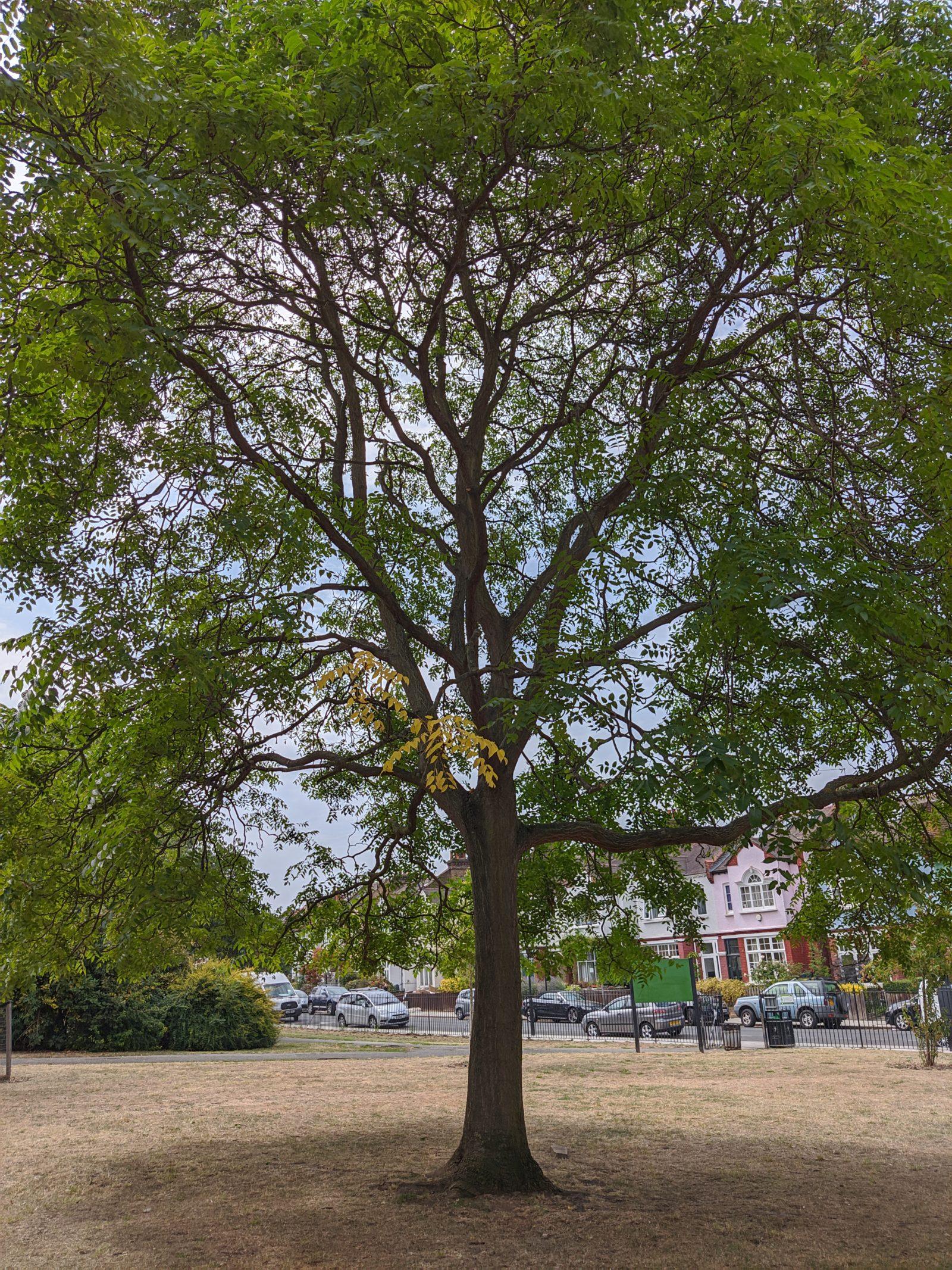 Tree 2 GCam